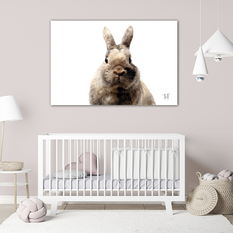 ToF Little rabbit liggend