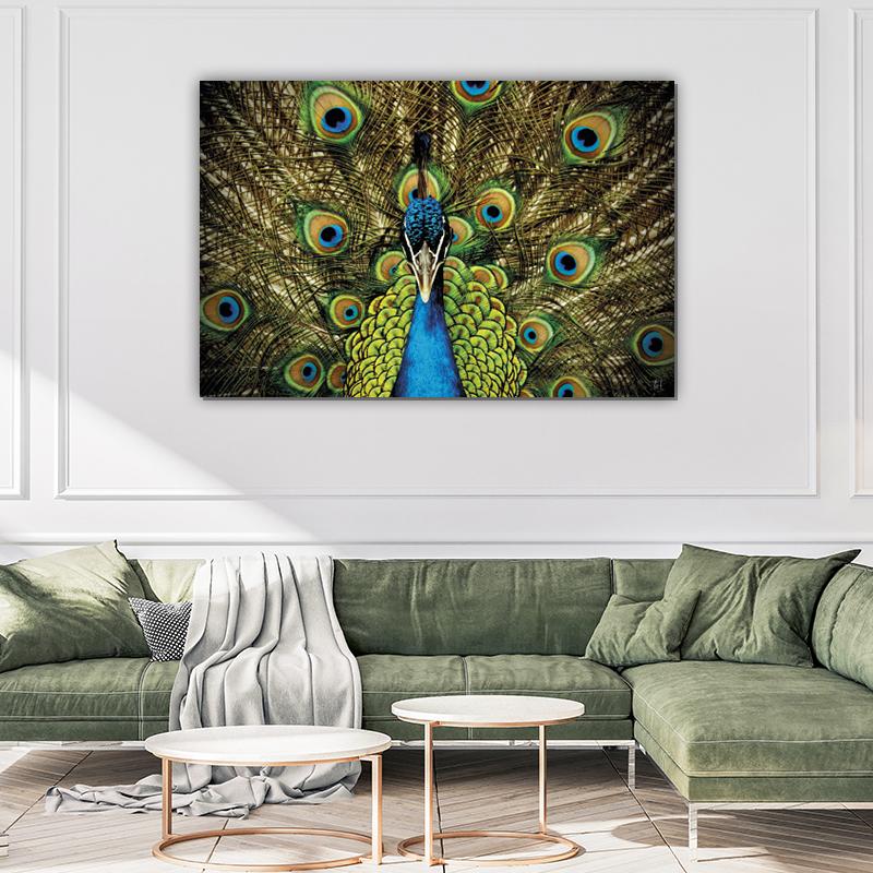 ToF Proud peacock