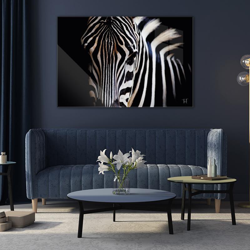 ToF Burchell's zebra liggend