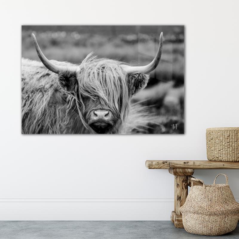 ToF Highland cow liggend