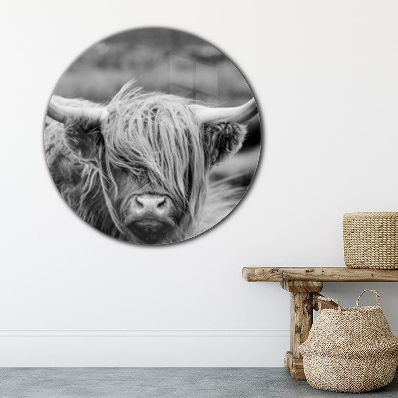 ToF Highland cow rond