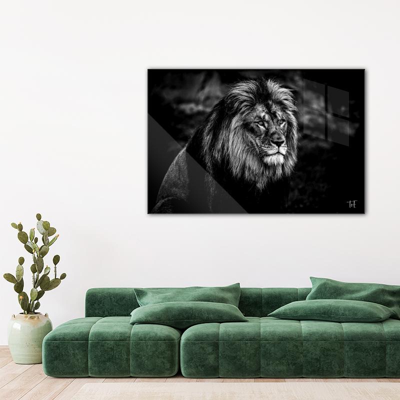 ToF Portrait of a lion liggend